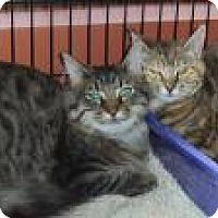 Adopt A Pet :: Ruthie and Ryan - Bear, DE