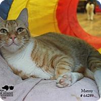 Adopt A Pet :: Manny - Baton Rouge, LA