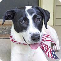 Adopt A Pet :: Dot - Baton Rouge, LA