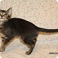 Adopt A Pet :: *JANNAH - Hanford, CA