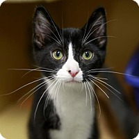 Adopt A Pet :: Mark - Kettering, OH