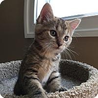 Adopt A Pet :: Ginevra - Herndon, VA