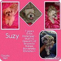 Adopt A Pet :: Suzy - Denver, CO