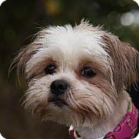 Adopt A Pet :: Baby Boo - Dearborn, MI