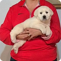 Adopt A Pet :: Rascal - South Euclid, OH