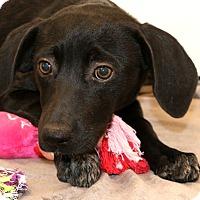 Adopt A Pet :: Mango~ adopted! - Glastonbury, CT