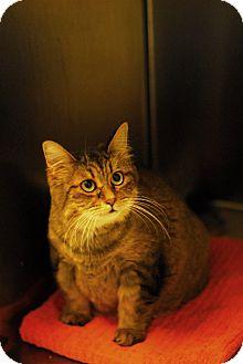 Domestic Longhair Cat for adoption in Everett, Ontario - Annabell