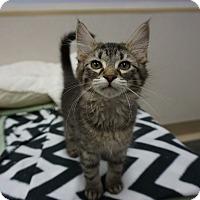 Adopt A Pet :: Smudge - Naperville, IL