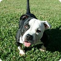 Adopt A Pet :: Tyrion - Baton Rouge, LA