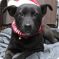 Adopt A Pet :: Cole - Rutledge, TN