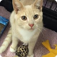 Adopt A Pet :: Carson and Colton - Bear, DE