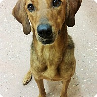 Adopt A Pet :: Lilly *FOSTER* - Appleton, WI