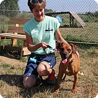 Adopt A Pet :: Troyer-Prison Graduate - Elyria, OH