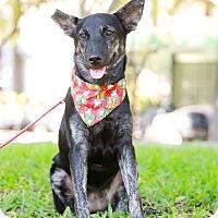 Adopt A Pet :: Anina - Castro Valley, CA
