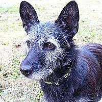 Adopt A Pet :: Bailee - LOVES kids! - Mocksville, NC