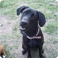 Adopt A Pet :: La La - Lodi, CA