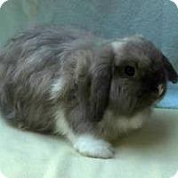 Adopt A Pet :: Fuzzels - Williston, FL