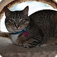 Adopt A Pet :: Dhalia - Byron Center, MI