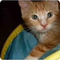 Adopt A Pet :: Harley - Kirkwood, DE