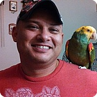 Adopt A Pet :: Simone - St. Louis, MO