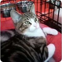 Adopt A Pet :: Yio - Brea, CA
