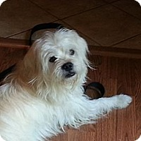 Adopt A Pet :: Rilley - Sinking Spring, PA