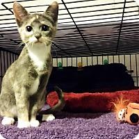 Adopt A Pet :: Rhapsody - Milwaukee, WI