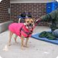 Adopt A Pet :: Buttercup - Park Ridge, NJ