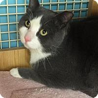 Adopt A Pet :: CUE - Ridgewood, NY