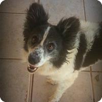 Adopt A Pet :: Judy - Alamogordo, NM