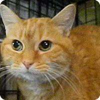 Adopt A Pet :: Kiya *declawed - Herndon, VA