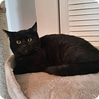 Adopt A Pet :: Elvis - Turnersville, NJ