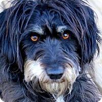 Adopt A Pet :: RYAN(OUR