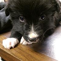 Adopt A Pet :: Kyle - Ogden, UT