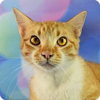 Adopt A Pet :: Demetrius - Carencro, LA