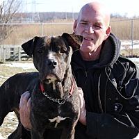 Adopt A Pet :: Bubba - Elyria, OH