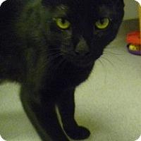 Adopt A Pet :: Kobi - Hamburg, NY