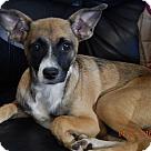 Adopt A Pet :: Robin (16 lb) Fun, Loving, Active Dog!