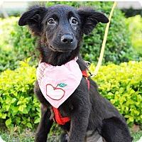Adopt A Pet :: Ali - Surrey, BC