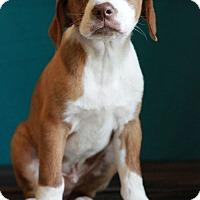 Adopt A Pet :: Alan - Waldorf, MD