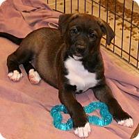 Adopt A Pet :: Theo - Bedminster, NJ