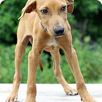 Adopt A Pet :: Jamaica - Waldorf, MD