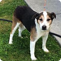 Adopt A Pet :: COOPER (Auburn) easy going boy - Bainbridge Island, WA