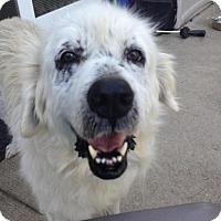 Adopt A Pet :: Minnie - Enfield, CT