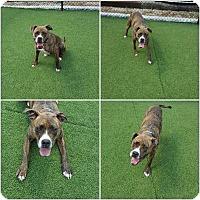 Adopt A Pet :: Mack - Lebanon, ME