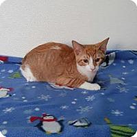 Adopt A Pet :: Ziggy - China, MI