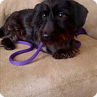 Adopt A Pet :: Sheldon- Adoption Pending - Lancaster, PA