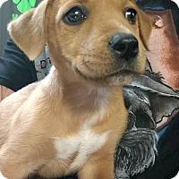 Adopt A Pet :: Jack - Wichita Falls, TX