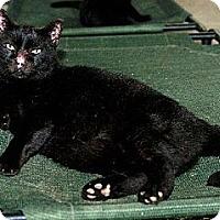 Adopt A Pet :: Daniel FE1-7306 - Thibodaux, LA