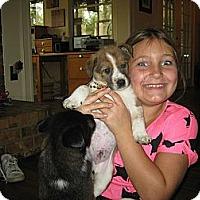 Adopt A Pet :: Caleb - Plano, TX